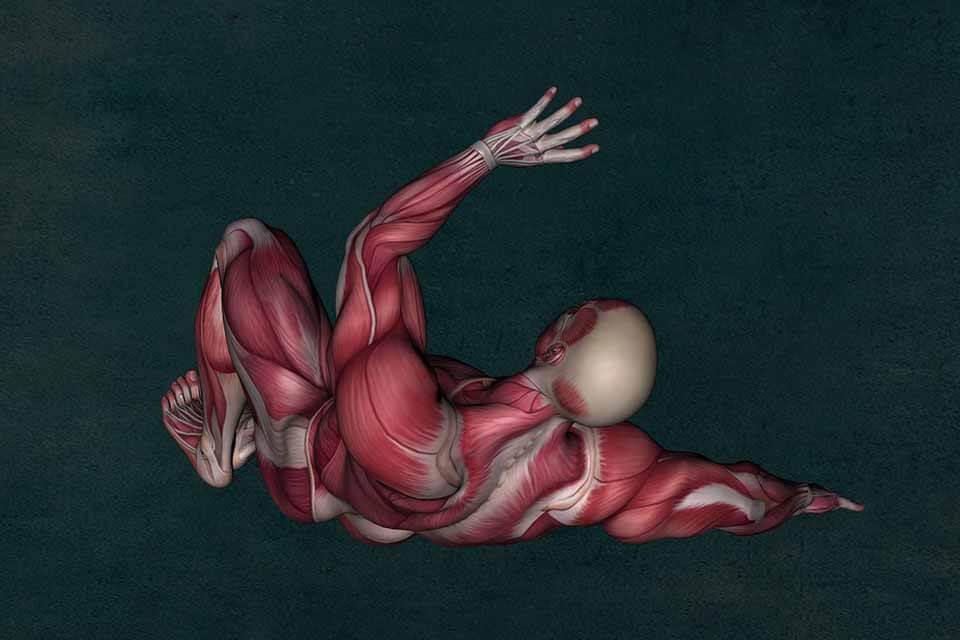 Odam anatomiyasi - mushak va paylarning ko'rininshi, kishi yiqilishi tufayli jarohatlar