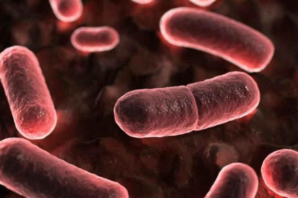 O'lat qo'zg'atuvchisi - Yersinia pestis bakteriyalari