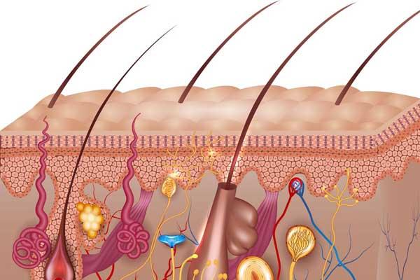 dermatologiya